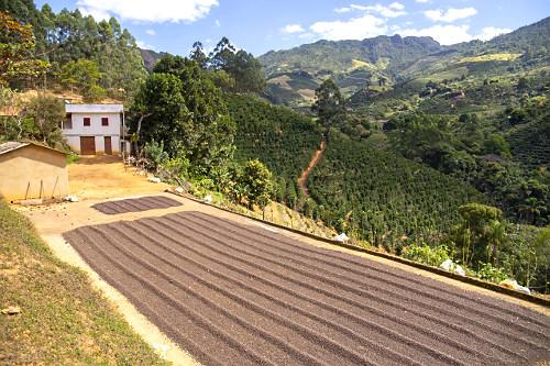 Pequena propriedade rural com grãos de café secando ao sol e cafezal ao fundo