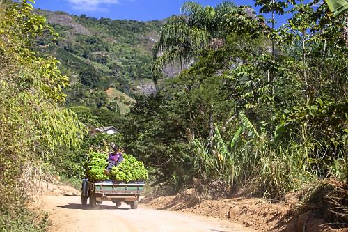 Transporte de carga de bananas com trabalhador rural na caçamba