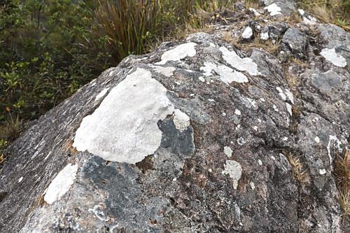 Líquens nas pedras no Parque Nacional do Itatiaia