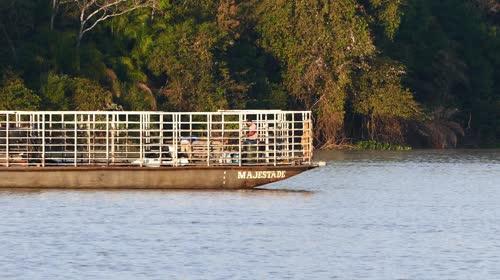 Balsa adaptada para transporte de gado - rio Cuiabá - conhecido na região por boieiro