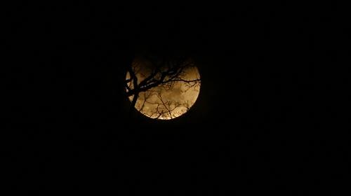 Eclipse lunar total - conhecida como lua de sangue - vista do Parque Estadual do Rio Doce